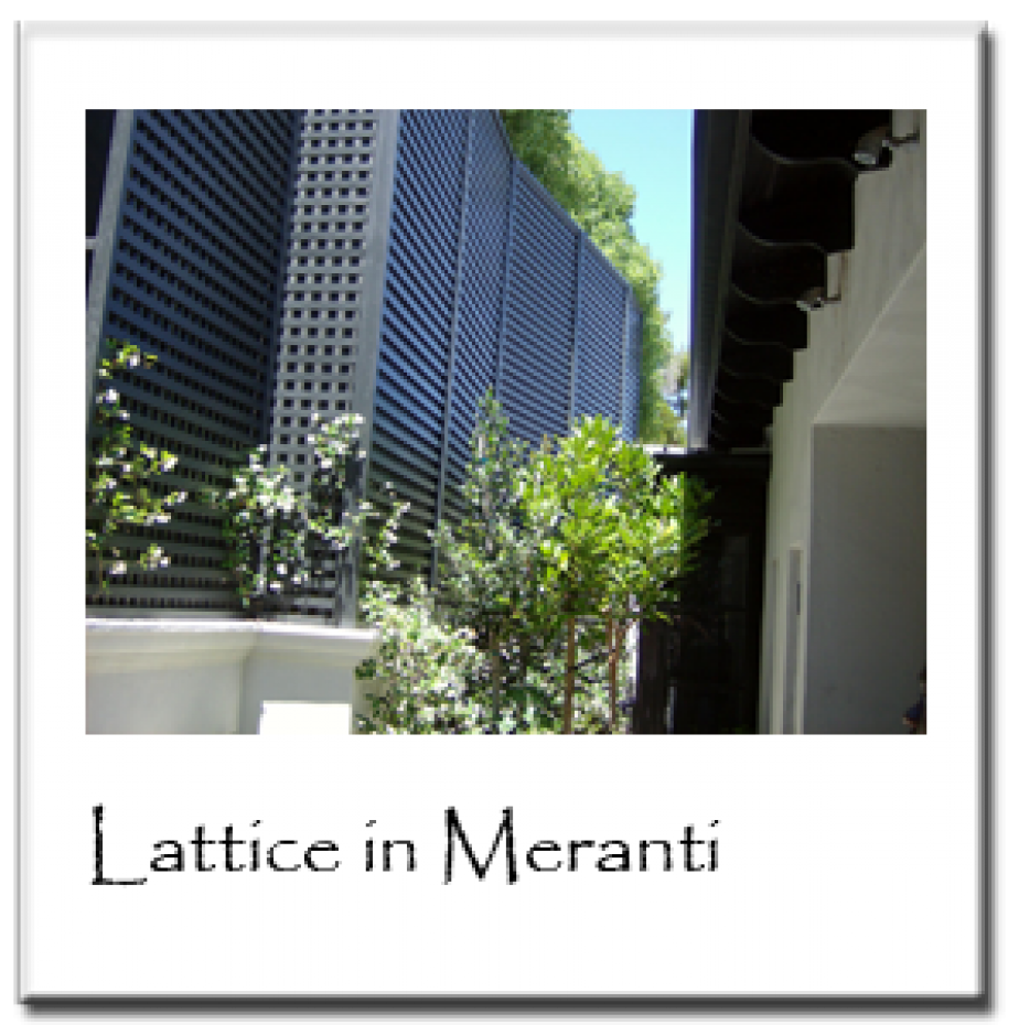 Lattice in Meranti