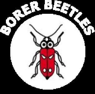 Borer Beetles CC